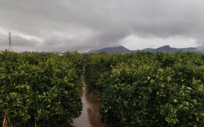 Harvest interrupted after only five days, due to continuous rainfall