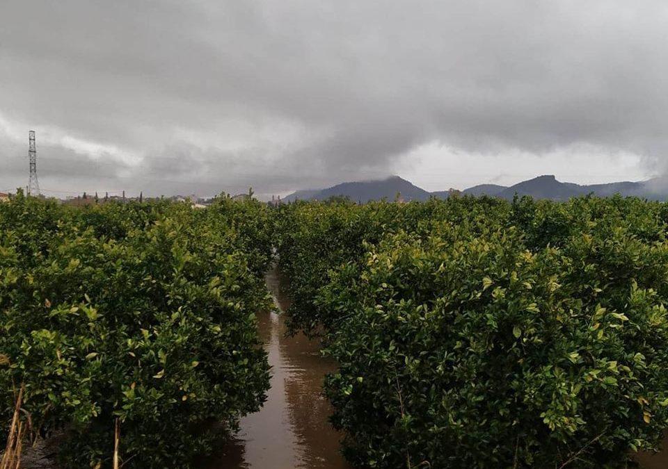 Ernteunterbruch nach nur fünf Tagen, wegen Dauerregen